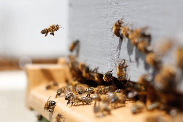 Medus – dabīgs un veselību stiprinošs produkts