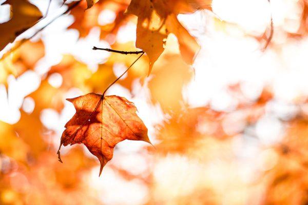 Rudens un ziema nāk kopā ar saaukstēšanās slimībām