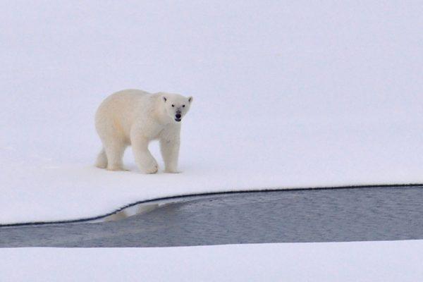Biezāku tauku slāni ziemai…?
