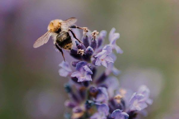 Ieelpotais gaiss var izraisīt alerģiju