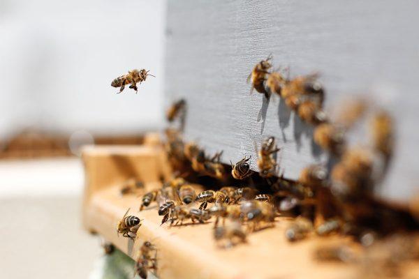Pacienta ceļvedis pie bišu kodumiem